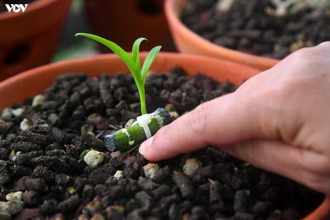 Ảnh: Vườn lan quý hiếm được chăm sóc, bảo vệ hơn cả kho báu - Ảnh 9.