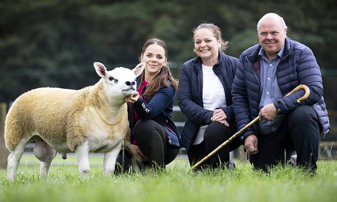 Gặp gỡ con cừu có giá bằng cả một dinh thự châu Âu - Ảnh 1.