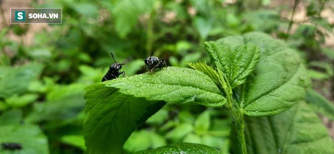 Bỏ nghề kỹ sư, chàng trai đi nuôi ruồi trong rừng: Tôi được làm việc mình thích, kiếm được tiền - Ảnh 1.