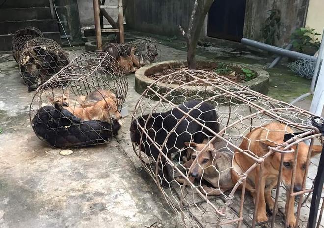 Nhóm cẩu tặc mang theo súng kiếm đi khắp tỉnh Nghệ An, mỗi đêm trộm nửa tấn chó - Ảnh 2.