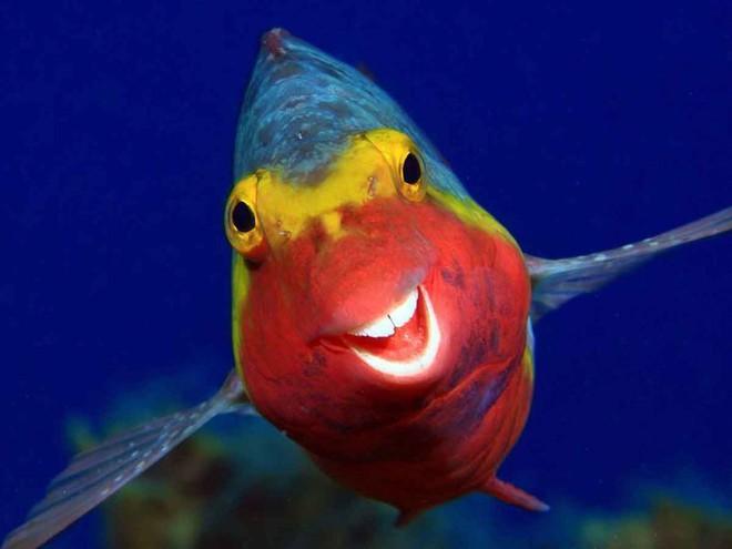 Bật cười với ảnh động vật hoang dã hài hước, vui nhộn - Ảnh 1.
