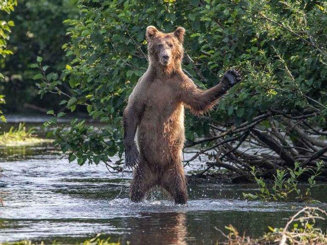 Bật cười với ảnh động vật hoang dã hài hước, vui nhộn - Ảnh 10.