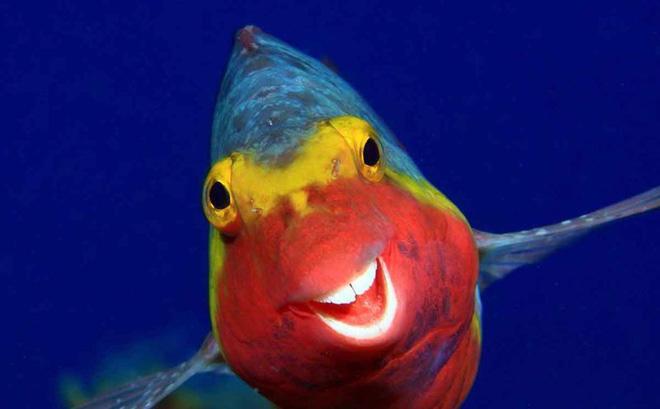 Bật cười với ảnh động vật hoang dã hài hước, vui nhộn