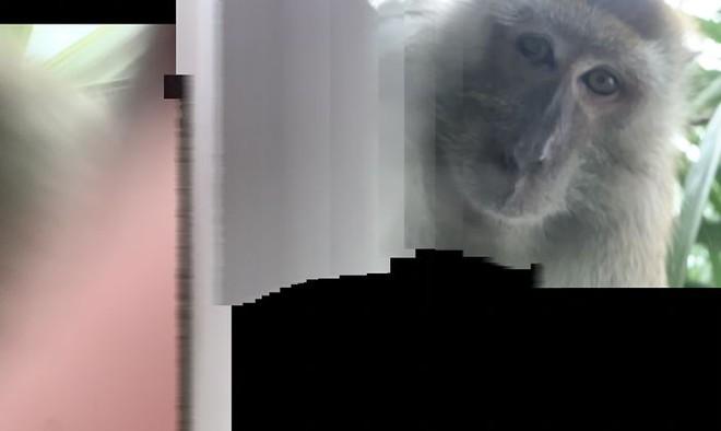 'Tên trộm' điện thoại ngố nhất hành tinh: Chụp selfie đầy máy, khiến chủ nhân không thể giận nổi - Ảnh 2.