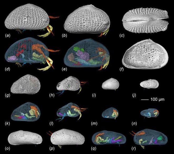 Dùng máy chụp cắt lớp, các nhà khoa học Trung Quốc phát hiện tinh trùng khổng lồ 100 triệu năm tuổi trong hổ phách hiếm - Ảnh 2.