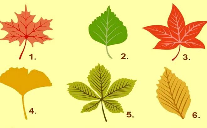Nhặt chiếc lá thu, khám phá tính cách: Người lãnh đạo sẽ nhặt chiếc lá nào dưới đây?