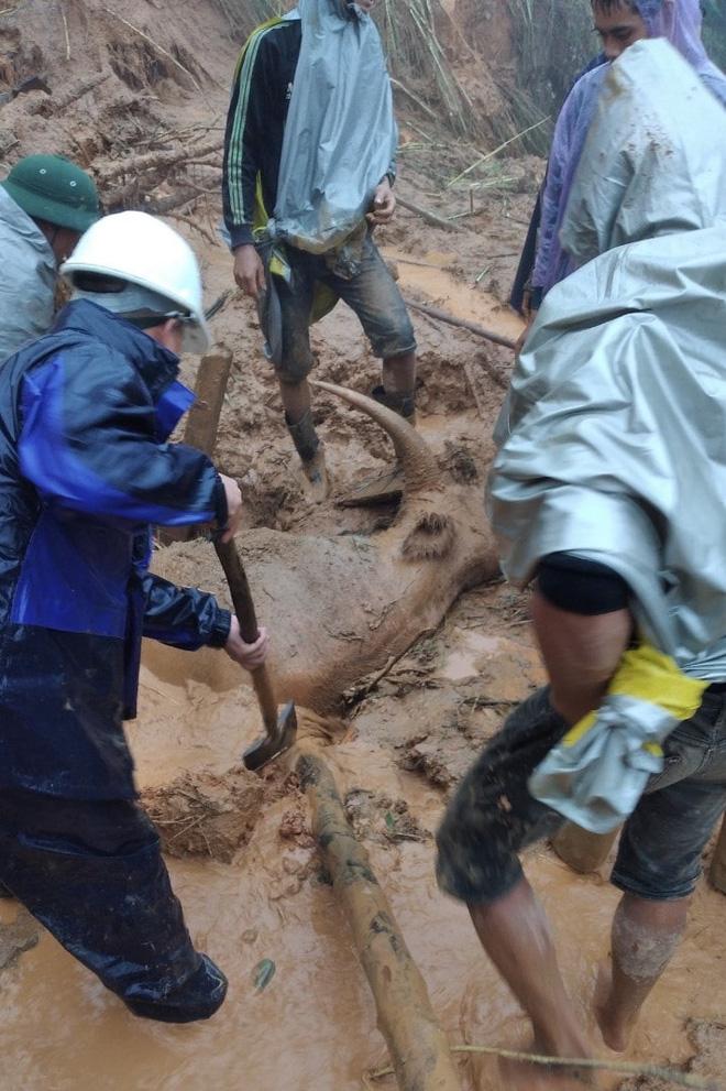 Cơn bão số 5: Sạt lở đất sau bão vùi lấp đàn trâu 8 con ở Nghệ An - Ảnh 8.