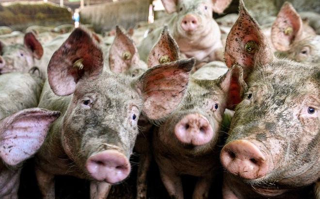 """Trung Quốc cấm nhập khẩu thịt lợn từ Đức: Động thái bất ngờ làm """"choáng"""" cả châu Âu"""