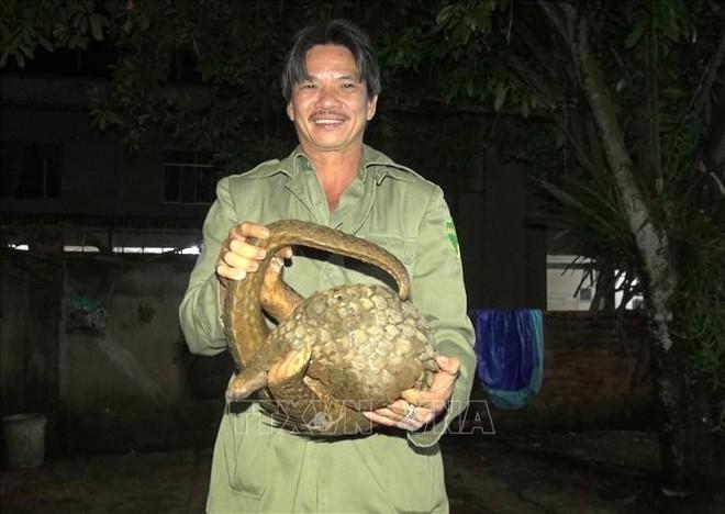 Bất ngờ thấy tê tê quý hiếm nặng 10kg bò ở trước cổng nhà, nhiều người cùng nhau vây bắt - Ảnh 1.