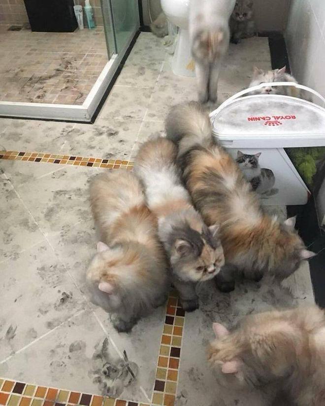 Máy lọc nước phát nổ trong nhà, phản ứng của đàn mèo khiến chủ dù tiếc của nhưng không nhịn được cười - Ảnh 3.
