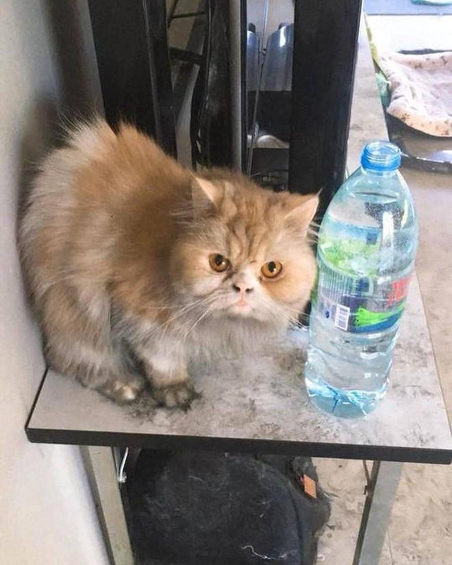 Máy lọc nước phát nổ trong nhà, phản ứng của đàn mèo khiến chủ dù tiếc của nhưng không nhịn được cười - Ảnh 2.