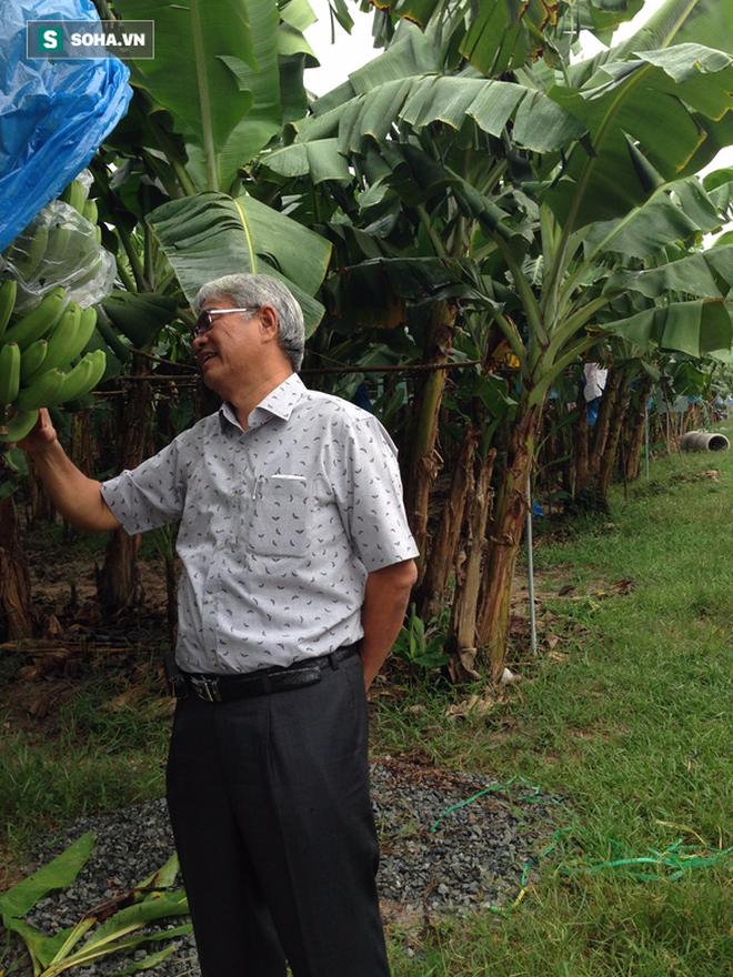Nông dân triệu đô Huy chuối: Từ kiệt sức vì trồng mía sai cách đến vùng canh tác 1.000ha đất trên 6 tỉnh - Ảnh 1.