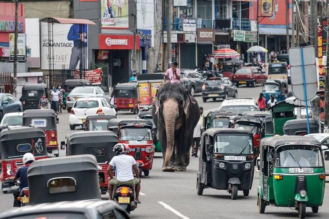 24h qua ảnh: Quản tượng cưỡi voi giữa đường phố đông đúc - Ảnh 4.
