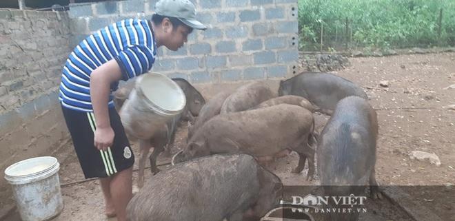 Lợn rừng giá trên trời 150.000 đồng/kg mà khách vẫn mua tơi tới, lợn giống cũng cháy hàng - Ảnh 2.