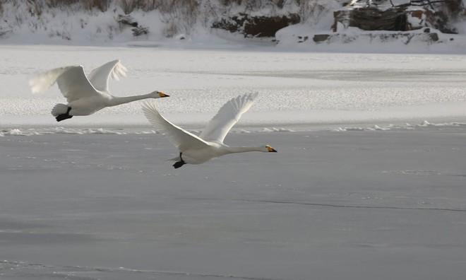 7 ngày qua ảnh: Nước đóng băng ngay khi tung lên trên không - Ảnh 3.