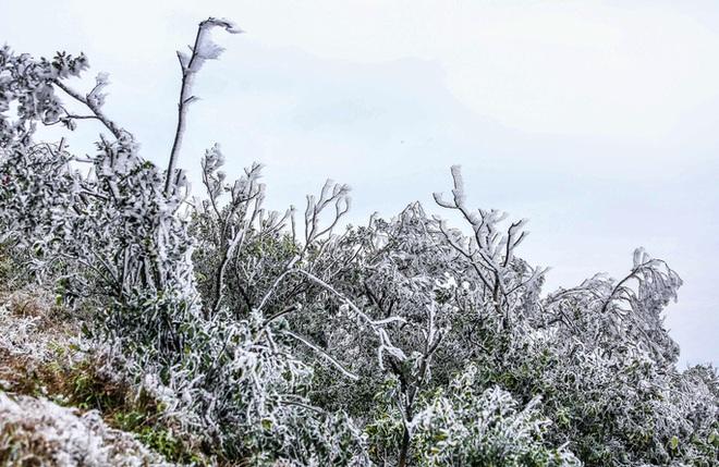Hàng ngàn du khách bất chấp rét buốt lên đỉnh Mẫu Sơn ngắm băng tuyết - Ảnh 14.