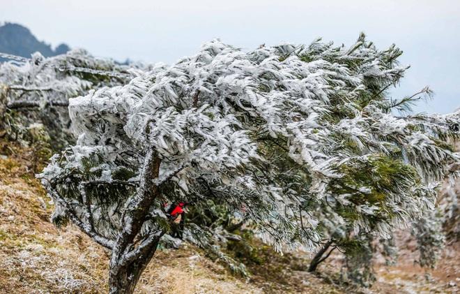 Hàng ngàn du khách bất chấp rét buốt lên đỉnh Mẫu Sơn ngắm băng tuyết - Ảnh 7.