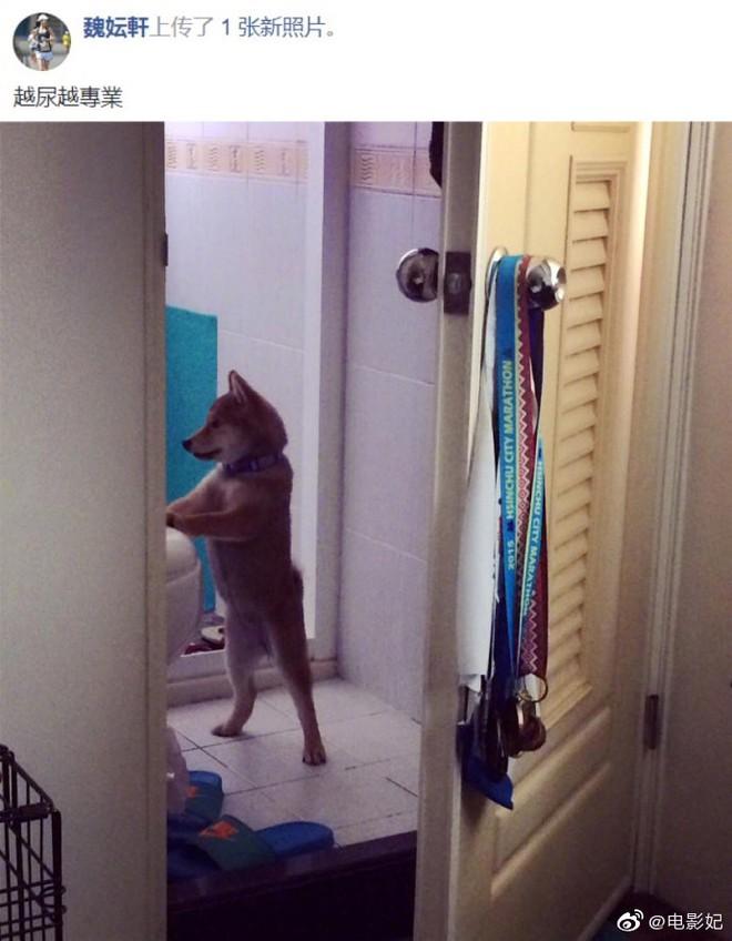 Chó cưng có sở thích kỳ lạ, chủ nhân tiếp tay càng khiến dân mạng được phen cười ngả nghiêng - Ảnh 1.