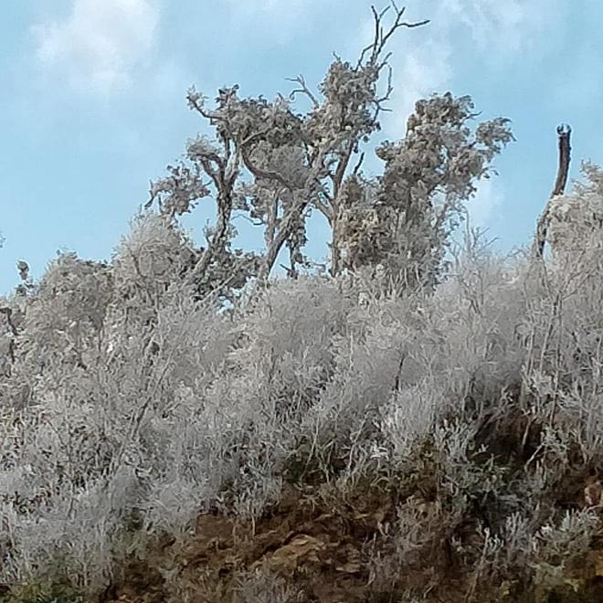 Nhiều nơi ở Nghệ An xuất hiện băng giá, cây cối, vật dụng đều bị đóng băng - Ảnh 2.