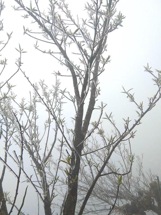 Nhiều nơi ở Nghệ An xuất hiện băng giá, cây cối, vật dụng đều bị đóng băng - Ảnh 13.