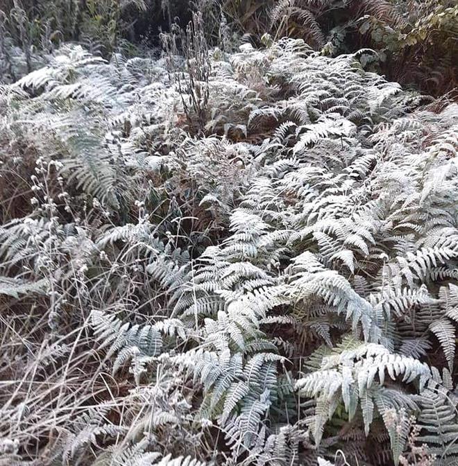 Nhiều nơi ở Nghệ An xuất hiện băng giá, cây cối, vật dụng đều bị đóng băng - Ảnh 15.