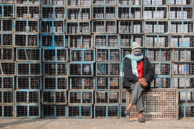 24h qua ảnh: Người bán hoa giả đạp xe trên cầu Long Biên - Ảnh 5.