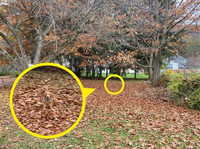 Thách thức thị giác cực khó: Bạn có thể tìm ra chú chó trong bức ảnh này? - Ảnh 1.
