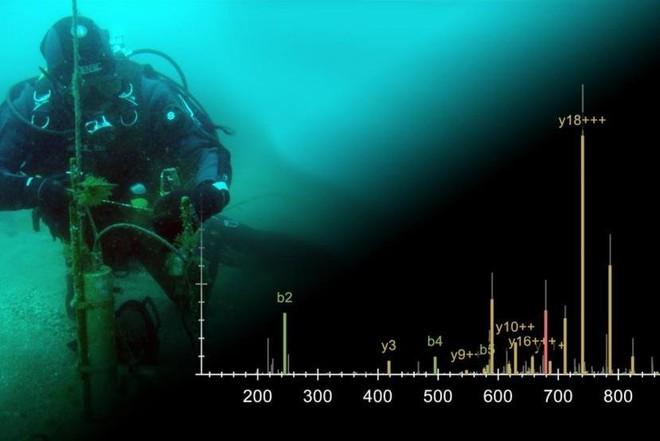 Tia cực tím giúp sinh vật biển xác định thời gian trong năm - Ảnh 1.