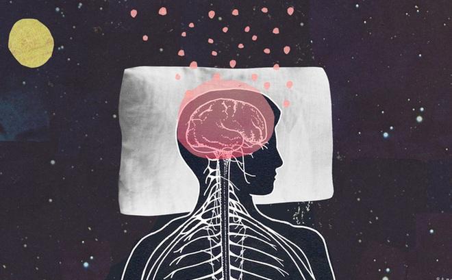 Cái nào có trước: Giấc ngủ hay bộ não? Các nhà khoa học cho rằng họ đã tìm ra câu trả lời