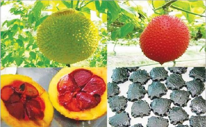 3 loại hạt làm thuốc và công dụng chữa bệnh