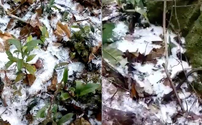 Trời hửng nắng nhưng tuyết vẫn rơi dày đặc, phủ trắng rừng cây ở biên giới Nghệ An
