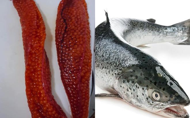 Mổ bụng cá hồi, bối rối phát hiện thứ màu cam nhớp nháp chưa từng ăn: Thực chất là bộ phận cực kỳ bổ dưỡng