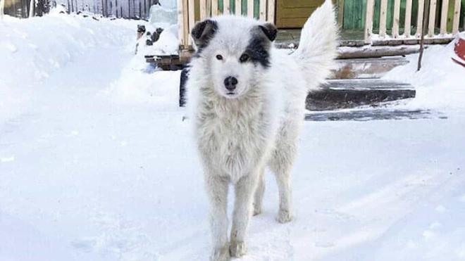 Thấy con chó co ro trong tuyết lạnh, người dân chạy đến cứu thì sững sờ với thứ nó giấu bên dưới - Ảnh 2.