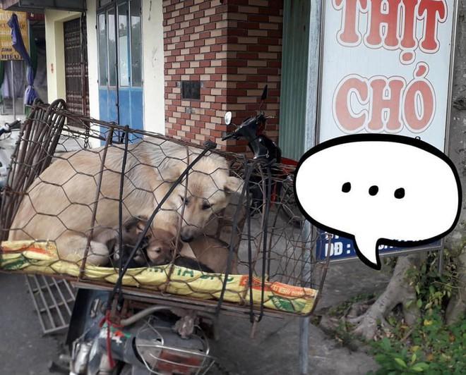 Hình ảnh khiến MXH Việt dậy sóng: Chó mẹ cho đàn con bú trước khi bị đưa vào lò mổ - Ảnh 1.