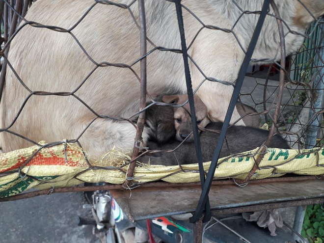 Hình ảnh khiến MXH Việt dậy sóng: Chó mẹ cho đàn con bú trước khi bị đưa vào lò mổ - Ảnh 3.