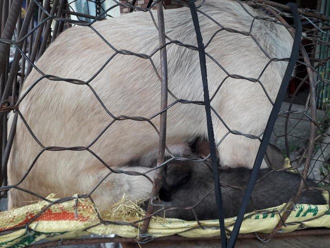 Hình ảnh khiến MXH Việt dậy sóng: Chó mẹ cho đàn con bú trước khi bị đưa vào lò mổ - Ảnh 2.