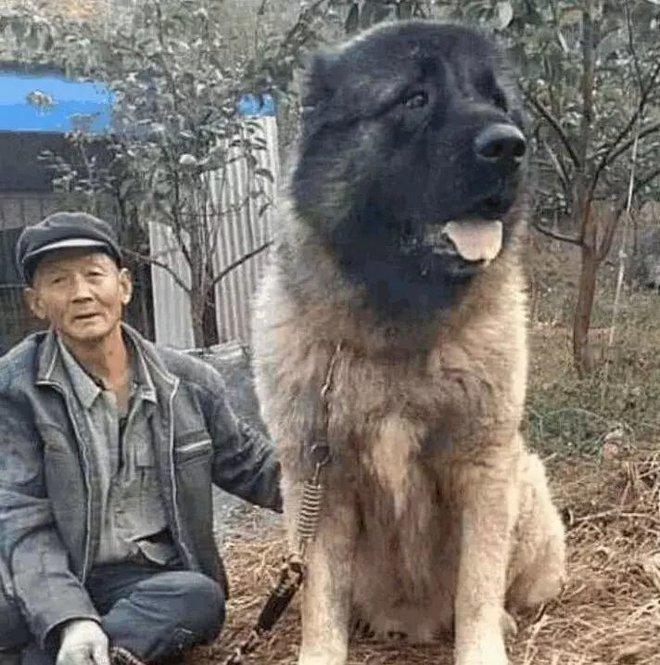 Ông cụ neo đơn nhận nuôi con chó thoi thóp bên đường - Sau 1 năm biến đổi bất ngờ, không ai dám đến gần nó - Ảnh 1.