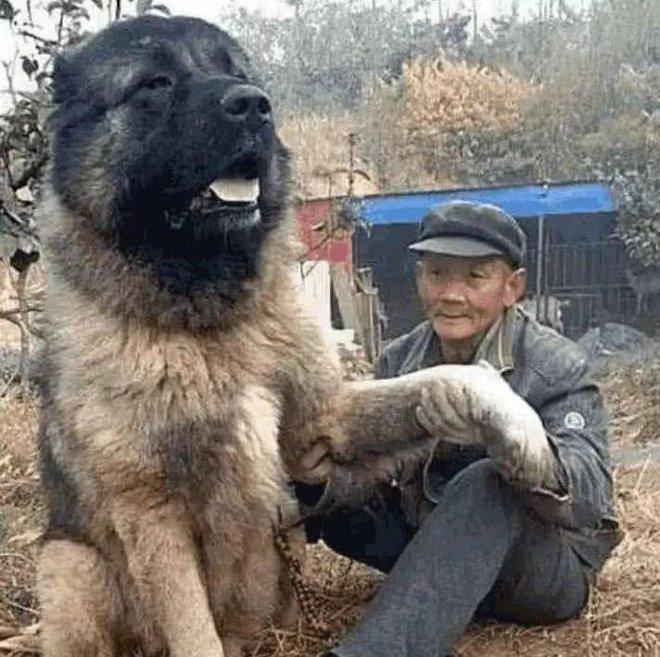 Ông cụ neo đơn nhận nuôi con chó thoi thóp bên đường - Sau 1 năm biến đổi bất ngờ, không ai dám đến gần nó - Ảnh 2.