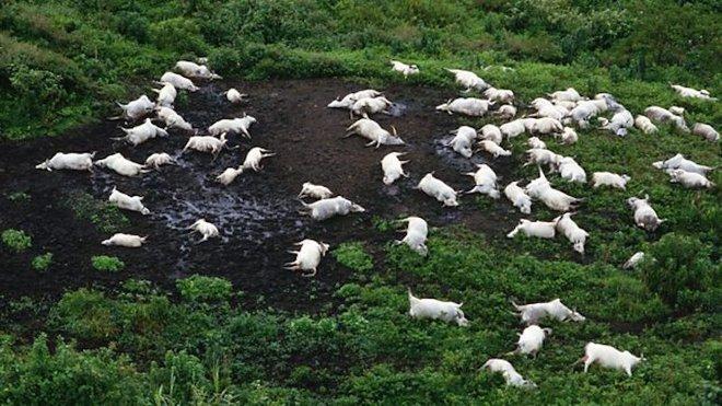 Hồ giết người châu Phi cướp đi hơn 1.700 sinh mạng - Sau khi rút nước, chuyên gia tìm ra hung thủ thực sự - Ảnh 3.