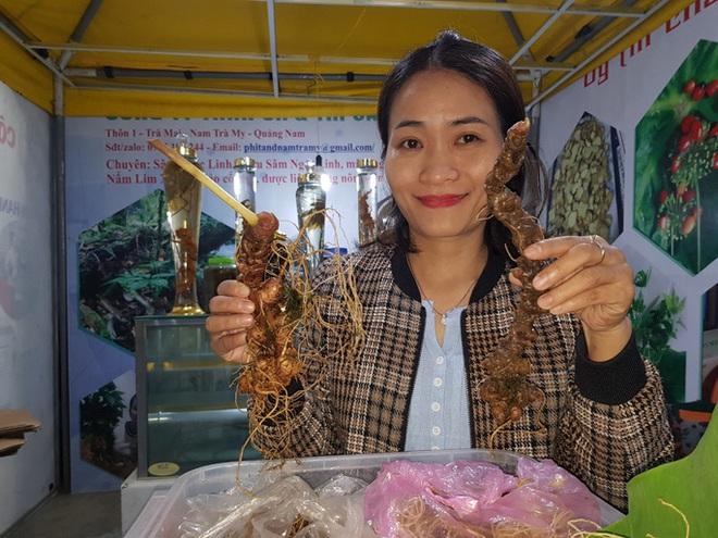 Quảng Nam chi 3 tỉ đồng trồng thử sâm Ngọc Linh nuôi cấy mô - Ảnh 1.