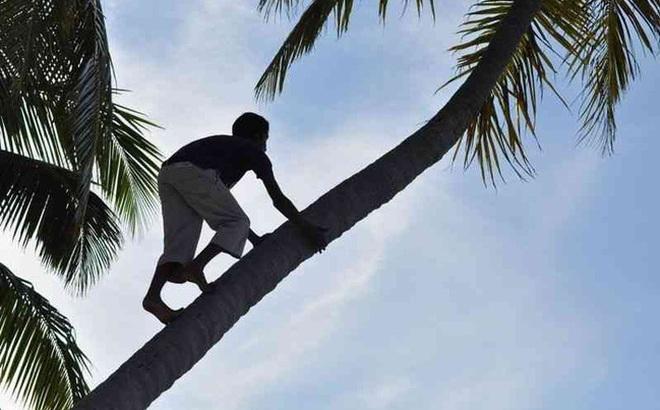 Đêm mưa, gia đình sợ hãi nghe tiếng trẻ con cười từ thân cây dừa nên mời thầy trừ tà rồi ngỡ ngàng khi biết nguyên nhân