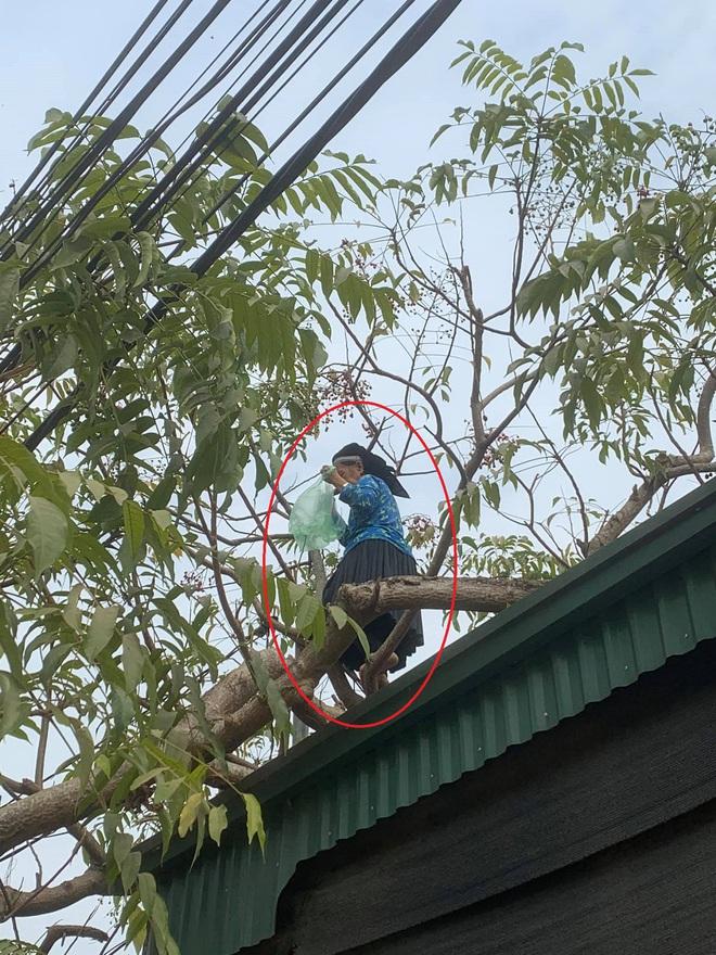Thấy bà cụ leo trèo thoăn thoắt trên cây, cô gái tò mò hỏi tuổi thì nhận câu trả lời bất ngờ - Ảnh 2.