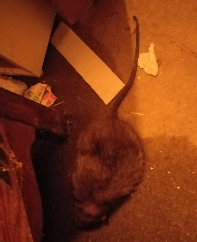 Tỉnh dậy giữa đêm, bà mẹ suýt ngất vì bị chuột bò lên mặt, vài ngày sau chuyện kinh dị xảy ra - Ảnh 4.