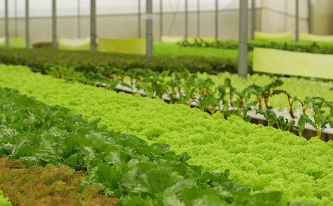 Thời gian sang tên sổ đỏ đất nông nghiệp năm 2021 là bao lâu?