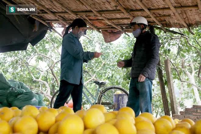 Trồng loại quả chín vàng, để càng héo càng thơm ngon, nông dân Hà Nội thu nửa tỷ vụ Tết - Ảnh 2.