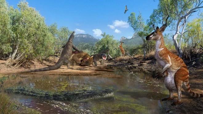 Để sổng mất con mồi lớn là Kangaroo, kỳ đà khổng lồ trút giận lên loài rắn cực độc - Ảnh 1.