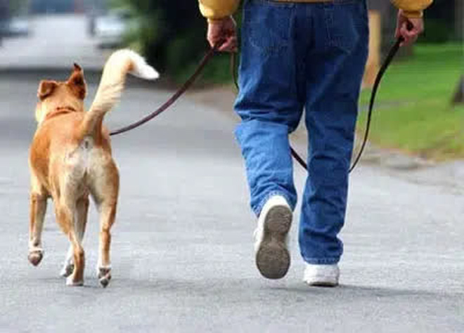 Tổ chức 1 cuộc thi chạy cho người và chó, vị thiên sứ xấu hổ không dám ngẩng mặt lên khi chứng kiến kết quả cuối cùng - Ảnh 4.