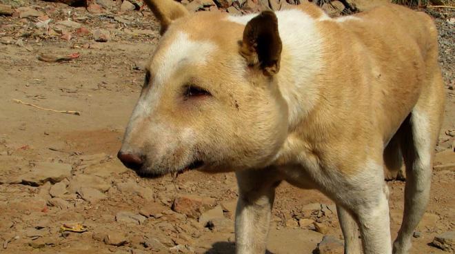Nhận được tin về 1 con chó hoang, đội cứu trợ đến nơi thì hoang mang không biết nó là con gì - Ảnh 2.