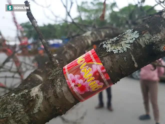 Đào rừng đổ bộ Thủ đô, cành hoa Tết 25 triệu xuất hiện chi tiết lạ chưa từng có - Ảnh 4.