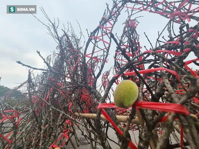 Đào rừng đổ bộ Thủ đô, cành hoa Tết 25 triệu xuất hiện chi tiết lạ chưa từng có - Ảnh 5.